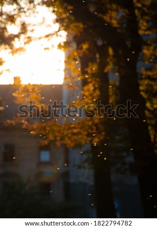 golden season autumn soft focus vertical picture October unfocused city photography with orange falling leaves and blurred background outdoor scenic view space