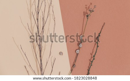 Fall Winter fashion minimal background with autumn brunch decor. Trendy pastel beige brown color shades.  Autumn mood