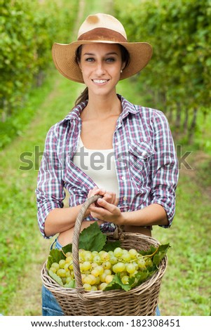 Young woman holding grapes in a basket in a vineyard  #182308451