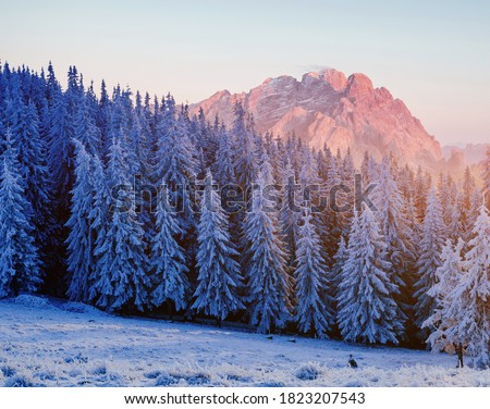Majestic landscape with forest at winter time. Scenery background. Royalty-Free Stock Photo #1823207543