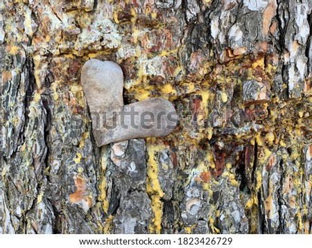 Dry heart shaped on a resinous tree trunk. Dried heart-shaped leaf lies on a pine tree trunk. Wood resin. Rough colored woody texture. Natural scene in forest. Nature background. Colored wood. #1823426729