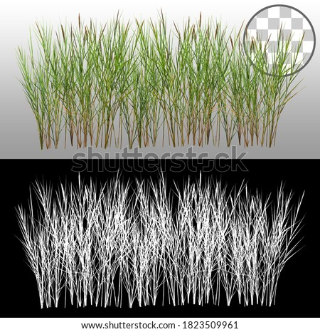 Bunch of wild grass. Blades of grass. Green tufts isolated on transparent background via an alpha channel. High quality clipping mask for professional composition.