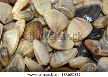 Picture of fresh Clams on a morning fish market. Seafood background.