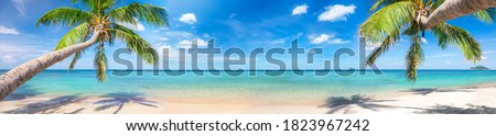 panorama of tropical beach with coconut palm trees Royalty-Free Stock Photo #1823967242