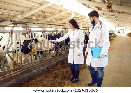 Two young livestock vets in lab coats checking on cows in cowshed on dairy farm, female doctor stroking cow tenderly. Regular veterinary monitoring, medical care and cattle breeding concepts Royalty-Free Stock Photo #1824015866