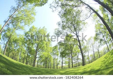 Trees of various fresh green #182408264