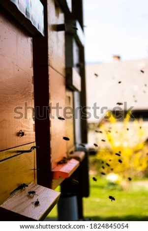 Picture of bees and honey comes