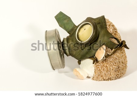 Plush toy (hedgehog) in an old gas mask on a white background. Funny picture.