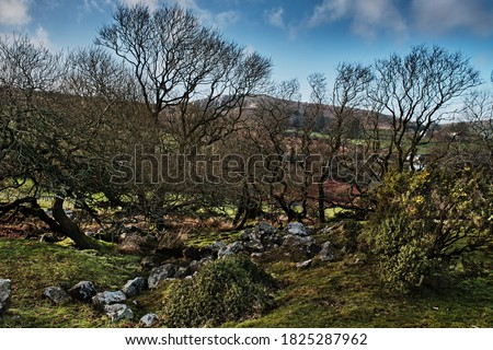 Minions Torr In Background With Trees & Rocks