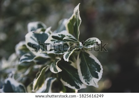 Green natural background. Beautiful green plant growing in the garden #1825616249