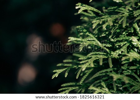 Green natural background. Beautiful green plant growing in the garden #1825616321