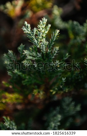 Green natural background. Beautiful green plant growing in the garden #1825616339