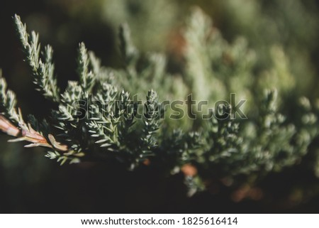 Green natural background. Beautiful green plant growing in the garden #1825616414