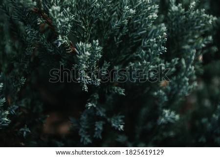 Green natural background. Beautiful green plant growing in the garden #1825619129