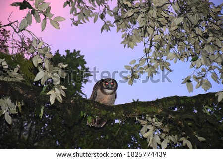 Beautiful picture of big brown owl in tree branch