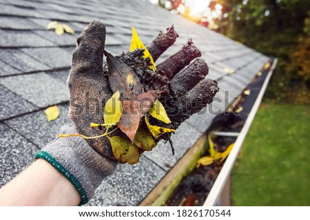 Cleaning leaves and debris out of rain gutters in autumn closeup of glove holding leaves and debris #1826170544