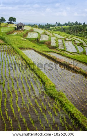 Bali Rice Terraces. The beautiful and dramatic rice fields of Jatiluwih in southeast Bali have been designated the prestigious UNESCO world heritage site. A truly inspirational landscape. #182620898