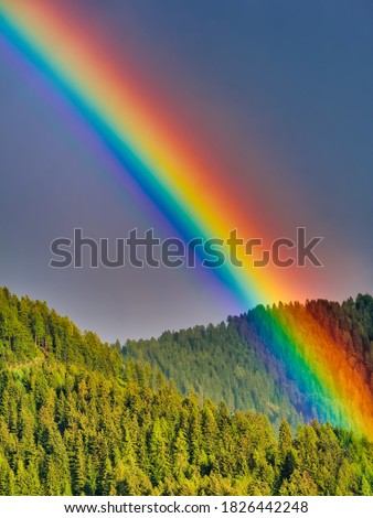 Rainbow over forest of fir trees in summer