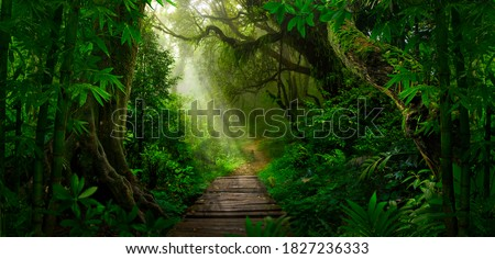 Tropical jungles of Southeast Asia in august Royalty-Free Stock Photo #1827236333