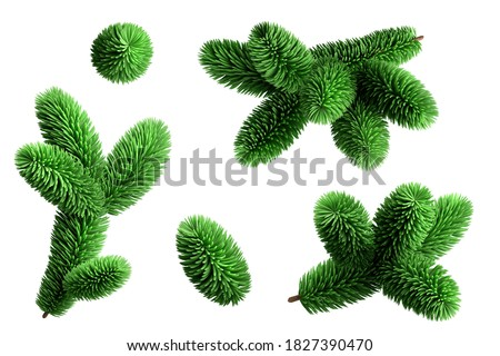 3d render, spruce twigs set, coniferous clip art collection, Christmas tree elements, isolated on white background