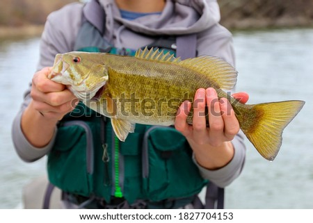 Fly fishing for small mouth bass Royalty-Free Stock Photo #1827704153