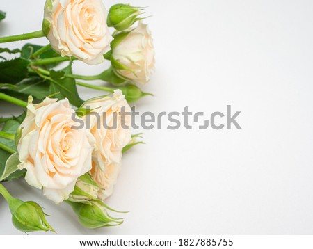 Bush roses of light cream color on a light background. Copy space.