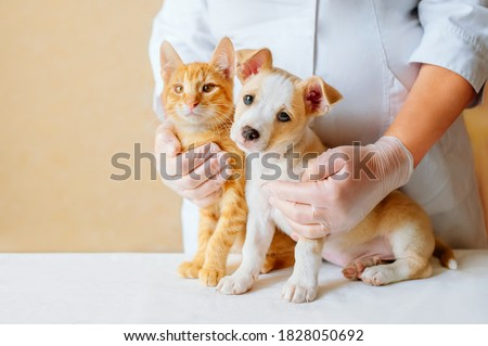 Vet examining dog and cat. Puppy and kitten at veterinarian doctor. Animal clinic. Pet check up and vaccination. Health care. Royalty-Free Stock Photo #1828050692