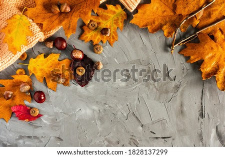Fall. Colored fallen leaves, chestnuts, acorns on a grey background, layout, copy space