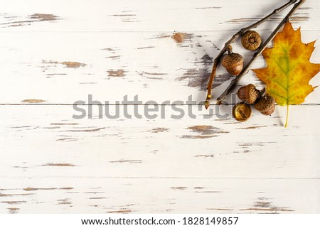 Fall. Colored fallen leaves, acorns on a wooden white background, layout, copy space