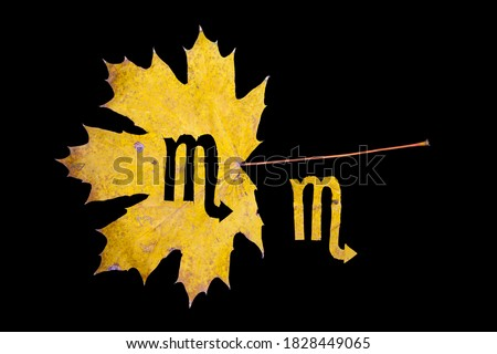 Autumn zodiac sign. Scorpio zodiac sign symbol cut from yellow maple leaf on black background