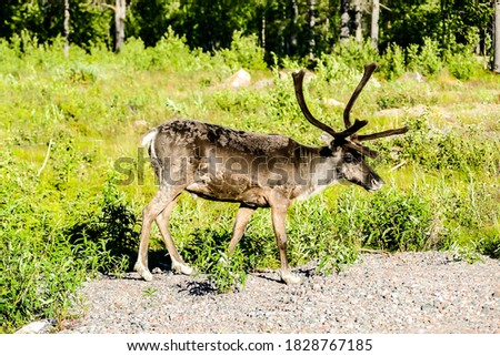 red deer in the forest, beautiful photo digital picture