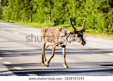 deer in the forest, beautiful photo digital picture