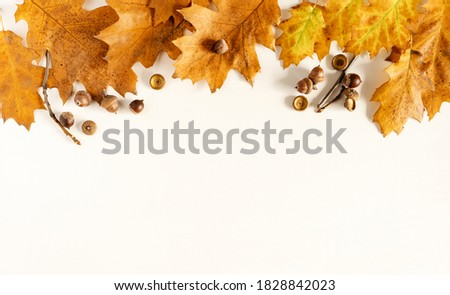 autumn. Colored fallen leaves, acorns on a wooden white background, copy space, banner