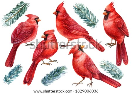 Set of birds and fir branches, watercolor clipart on white isolated background.