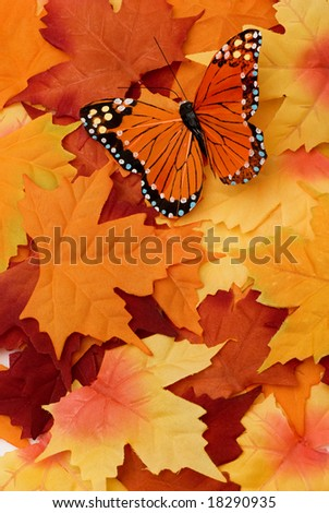 A colorful picture of a autumn scene