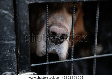 Hunting dog in a cage Royalty-Free Stock Photo #1829576201