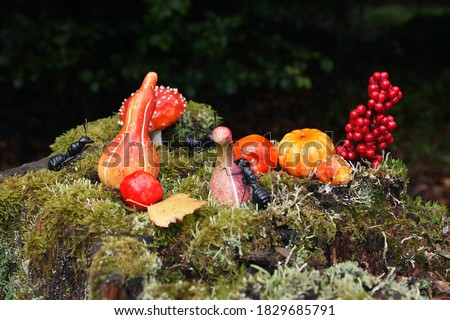 pumpkins and ants in fall in the forest