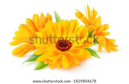 Three flowers of calendula (marigold) isolated on white background