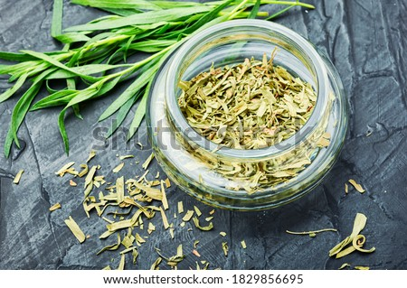 Raw and dry tarragon spice.Tarragon or Artemisia dracunculus #1829856695