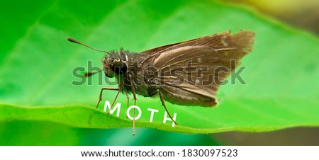 Close up picture of moth insect.