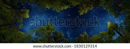 The rustle of the forest and the dance of the stars in a quiet night. Royalty-Free Stock Photo #1830129314
