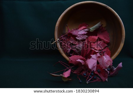 Burgundy leaves of wild grapes in a wooden bowl on a dark background of malachite color. Maroon, ruby burgundy, red burgundy, bright burgundy #1830230894