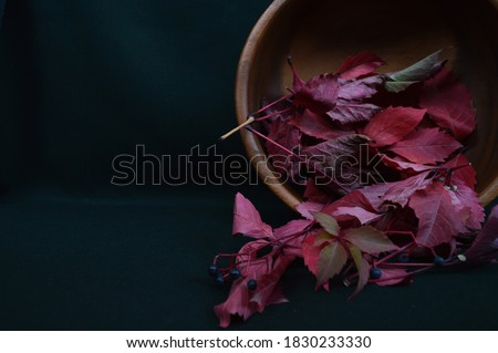 Burgundy leaves of wild grapes in a wooden bowl on a dark background of malachite color. Maroon, ruby burgundy, red burgundy, bright burgundy. Autumn.  #1830233330