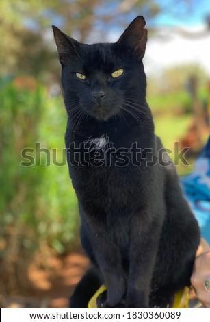 Black cat with intense eyes