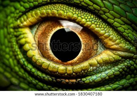 Macro shot of a green iguana's eye Royalty-Free Stock Photo #1830407180