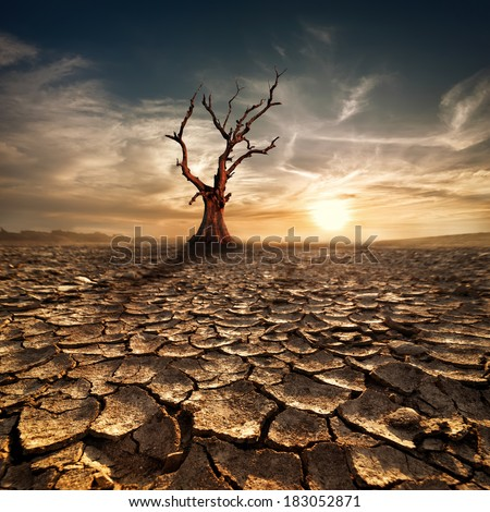 Global warming concept. Lonely dead tree under dramatic evening sunset sky at drought cracked desert landscape #183052871