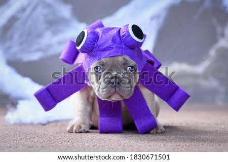 Funny French Bulldog puppy wearing purple Halloween octopus dog costume with big eyes and tentacles
