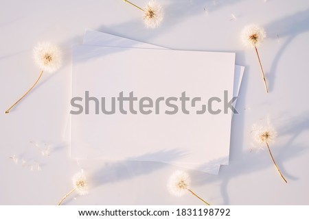 Mockup poster or flyer for presentation, white sheets of paper with fluffy faded dandelions and shadows on a gray background at sunset. Congratulations blank, business card. Top view, flat lay
