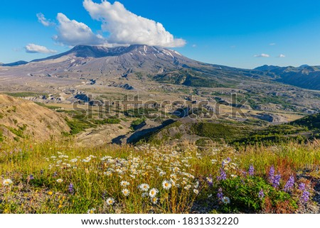Amazing valley of flowers. White clouds are hovering over the large crater. Mount St Helens National Park, West Part, South Cascades in Washington State, USA #1831332220
