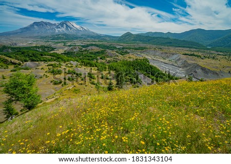 Amazing valley of flowers. White clouds are hovering over the large crater. Mount St Helens National Park, West Part, South Cascades in Washington State, USA #1831343104